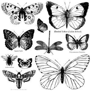 IOD-DS-Butterflies-DEC-STA-BUT-300×300